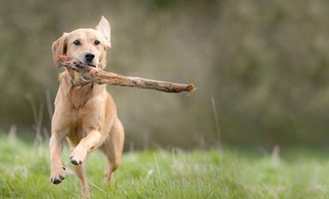 Préserver la santé de votre animal